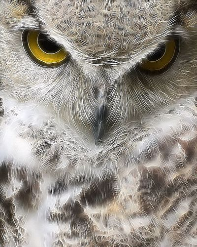 Digger 💕 Canadese Oehoe / Northern Great Horned Owl Owl CanadeseOehoe NorthernGreatHornedOwl Oehoe Birdsofprey Predator Wild Wildlife Bird Photography EyeEm Birds