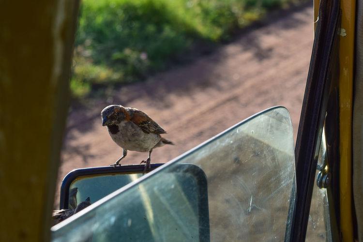 Close-up of bird perching on car window