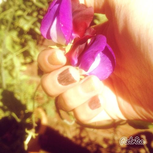 Flower Sun Beauty Taking Photo Good Day Nature Garden ☀️