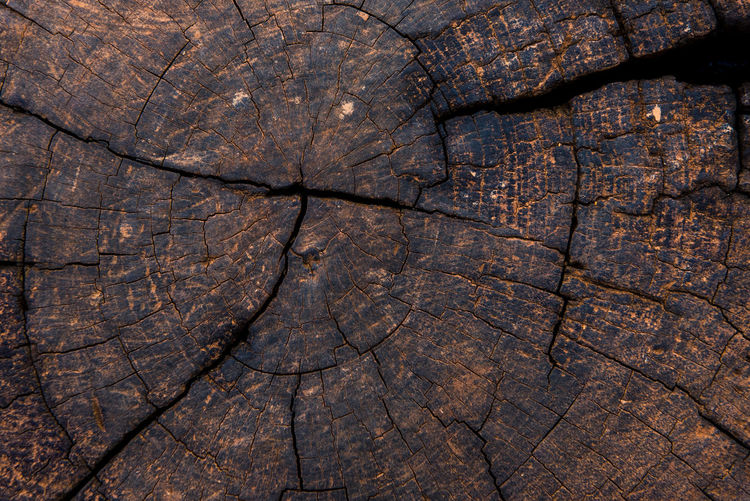 Ancient Backgrounds Brown Close-up Cracked Day Fossil Full Frame Nature No People Outdoors Textured  Tree Tree Ring