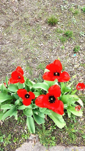 Flower Petal Nature Beauty In Nature Poppy Freshness