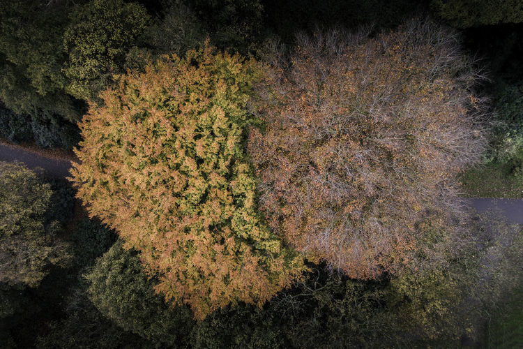 Above the canopy - Autumn Colour Aerial Shot Autumn Autumn Collection Autumn Colors Autumn Leaves Colors Colours Drone  Fall Colors Aerial View Autumn Beauty In Nature Colorful Droneshot Fall Fall Leaves Forest Forest Trees Growth Nature Outdoors Tranquil Scene Tree Woodlands Woods