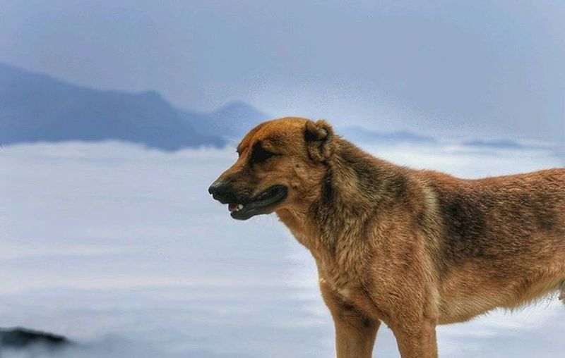 Dog Pets Domestic Animals One Animal Mammal Animal Themes Sky Water Cloud - Sky Nature Outdoors