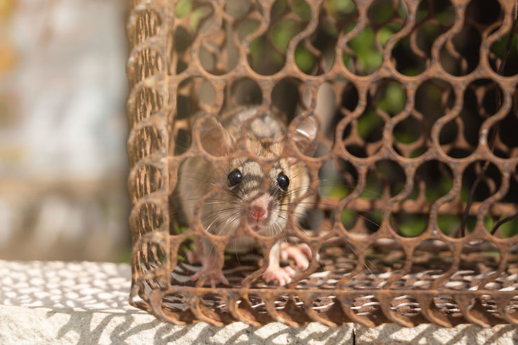 Portrait of mouse in cage
