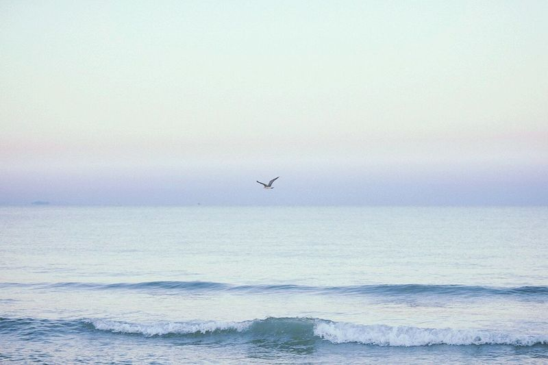Our sea, our swash. Наше море, наш прибой.🌊🌊🌊🌁 Sea Sea And Sky Seagull Sea Tour Sea View Our Sea Hello World Air Море Море, я люблю тебя  Ocean Ocean View холодные огни Dawn Of A New Day The Essence Of Summer The Street Photographer - 2016 EyeEm Awards солнцеморепесок летниеночи Summer Stunning View