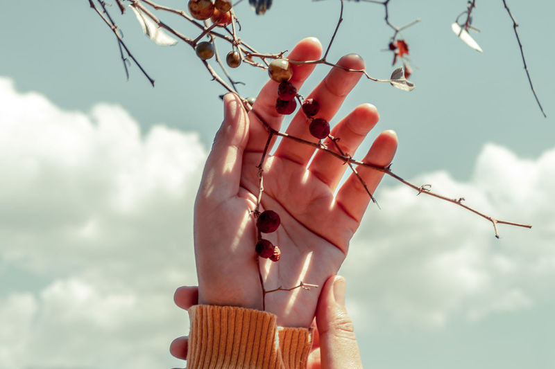Low angle view of hand holding fruit tree against sky