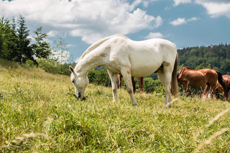 Horses on the green meadow Animal Animal Themes Animal Wildlife Cloud - Sky Day Domestic Domestic Animals Field Grass Grazing Group Of Animals Herbivorous Land Livestock Mammal Nature No People Outdoors Pets Plant Two Animals Vertebrate