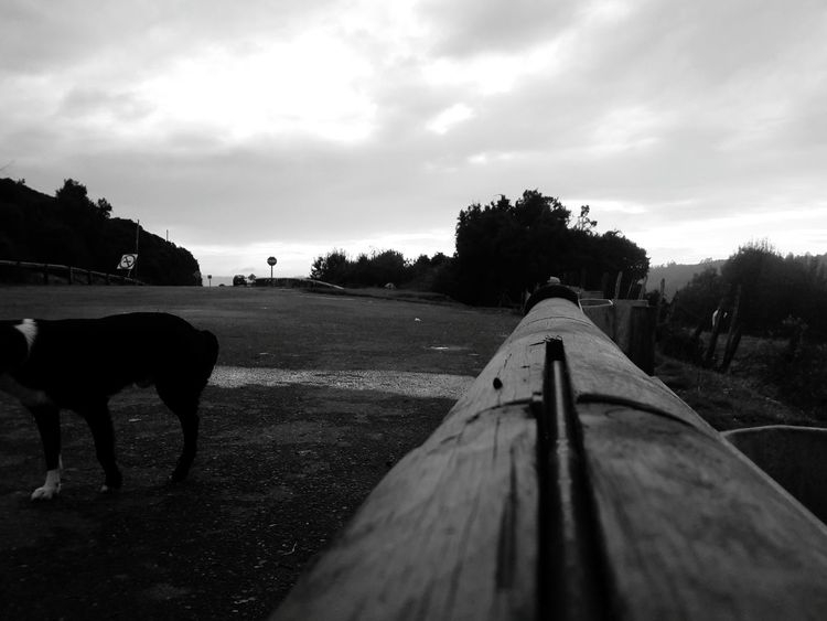 📷💥First Eyeem Photo Relaxing Followme Nice Day Enjoying Life Nature Photography Landscape_photography NatureNaturelovers J7 Chilefotos Chilepaisajes Castro Chile Blackandwhite Blancoynegro Dog Nice