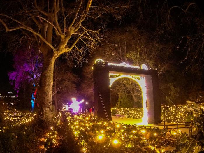 Digital composite image of illuminated christmas tree at night