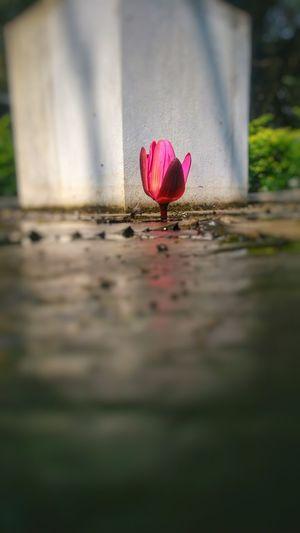 LØTÜ flower of