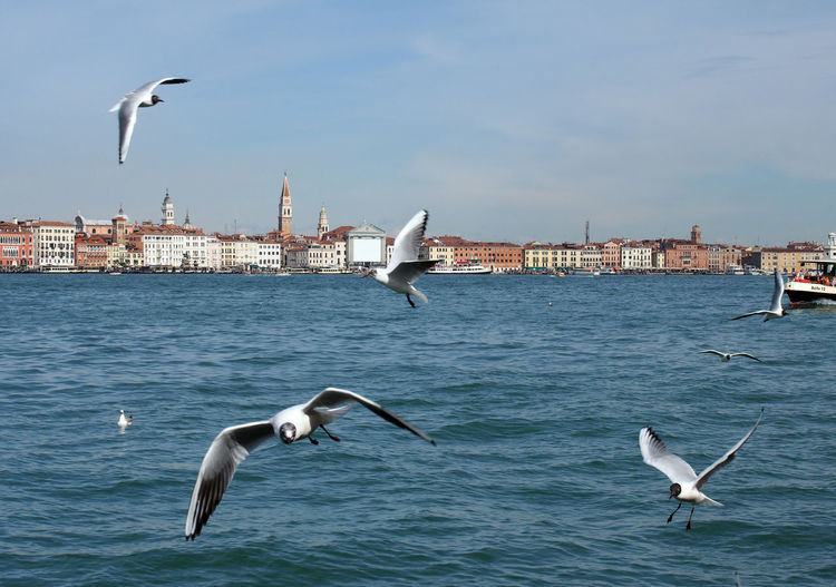 Seagulls Flying Over Sea In City