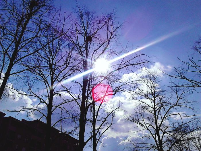 Sunny Day Days In March Naked Trees Sun Light Blue Sky Sky And Clouds Sky Collection