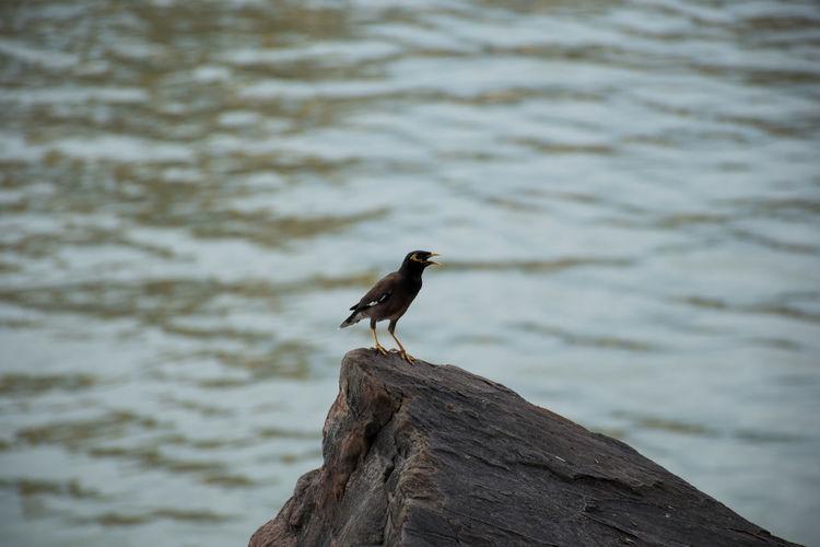 bird on rock Mourning Dove Dove - Bird Robin Beak Songbird  Blackbird Bluetit Pigeon Pelican Sea Bird Animal Nest Hornbill Kingfisher Raven - Bird Young Bird Bird Nest Stork