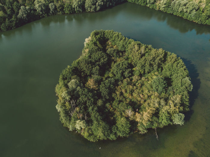Directly above aerial shot of trees surrounded by lake