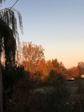 Good morning! I hope you have a wonderful day! Beauty In Nature No People Scenics Tranquility Outdoors Frosty Morning Autumn 2016 Sunrise_Collection Blessed & Thankful :) Beautiful Sunrise Tree Clear Sky Taken On Mobile Device Female Photographer God's Creation Fields And Sky Woods And Color Cows In A Field Waiting For Food No Filter, No Edit, Just Photography Nature_collection Landscape_collection EyeEmNatureLover Autumn Is Here...Fall Mood! EyeEm Masterclass Enjoy The Little Things
