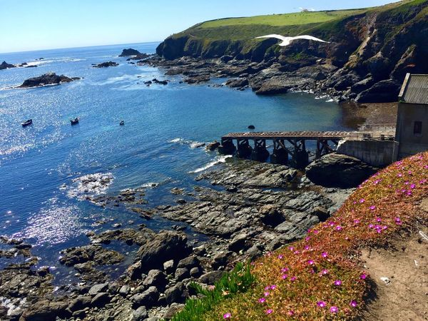 English Coastline English Coastal Region English Coast Rocky Coastline Rocky Rocky Cliffs Rocky Landscape Rocky Shoreline Rocky Shorelines Rocky Shore Rocky Shore By The Sea Seagull Seagulls And Sea SEAGULL IN FLIGHT Seagulls Seagulls In Flight Beauty In Nature Nature Photography Ladscape Photography Landscape Landscape_Collection Wild Flowers Wild Flower Across The Sea Atlantic Ocean