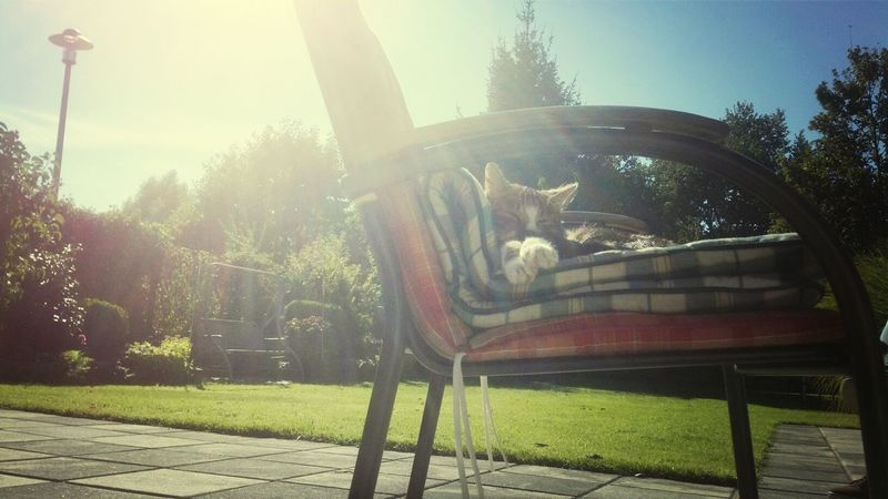 Sweet Cat Garden Chilling