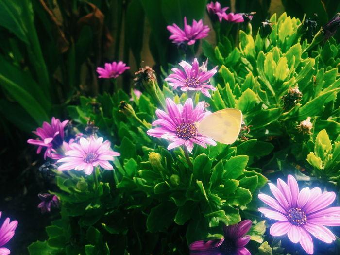 Flower Flaing On Air