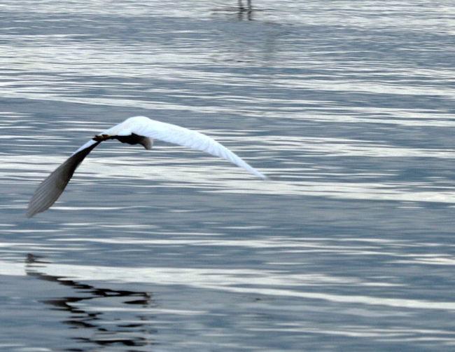 Waterfront Beauty In Nature Bird On Flight