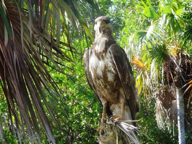Greenery Trees Nature Birdofprey Bird Leaves Wild Wildlife Green Hunter Beautiful