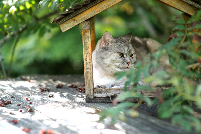 Animal Animal Themes Bird Feeder Cat Cat House Day Domestic Domestic Animals Domestic Cat Feline Gray Mammal Nature No People One Animal Outdoors Pets Plant Selective Focus Sitting Vertebrate Whisker Wood - Material Yellow Eyes