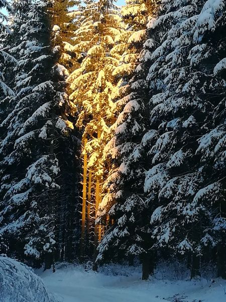 Winter Snow No People Cold Temperature Outdoors Backgrounds Nature