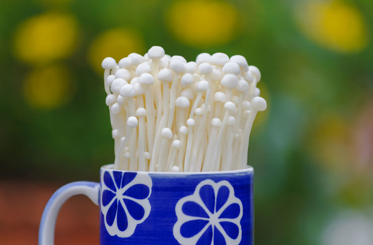 Freshness Growth Blue Close-up Coffee - Drink Cup Day Drink Enoki Enoki Mushrooms Focus On Foreground Food Food And Drink Freshness Mug Mushroom Nature No People Outdoors Pattern Plant Plastic Selective Focus Still Life White Color