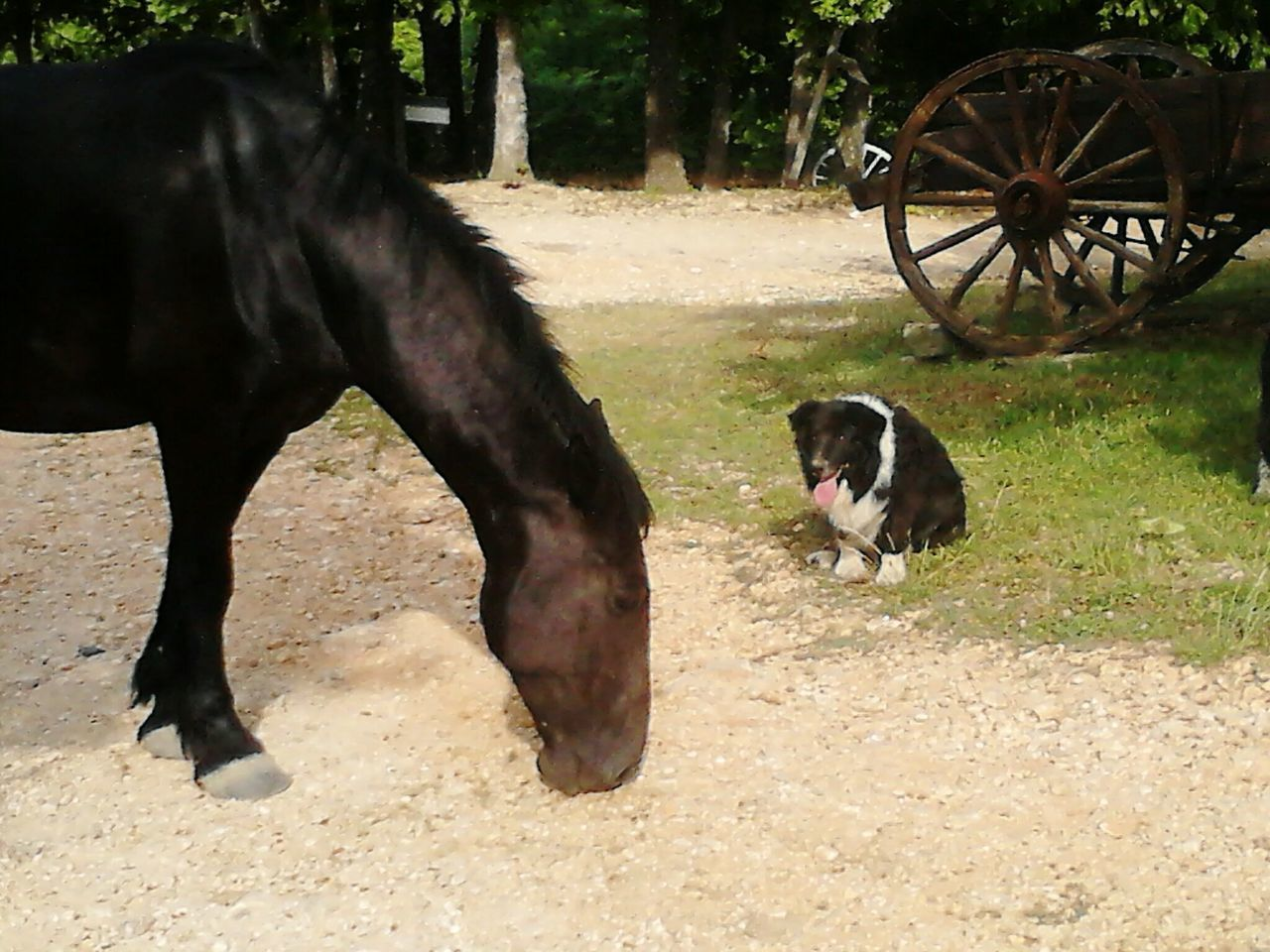 domestic animals, animal themes, mammal, pets, one animal, field, dog, day, no people, outdoors, nature