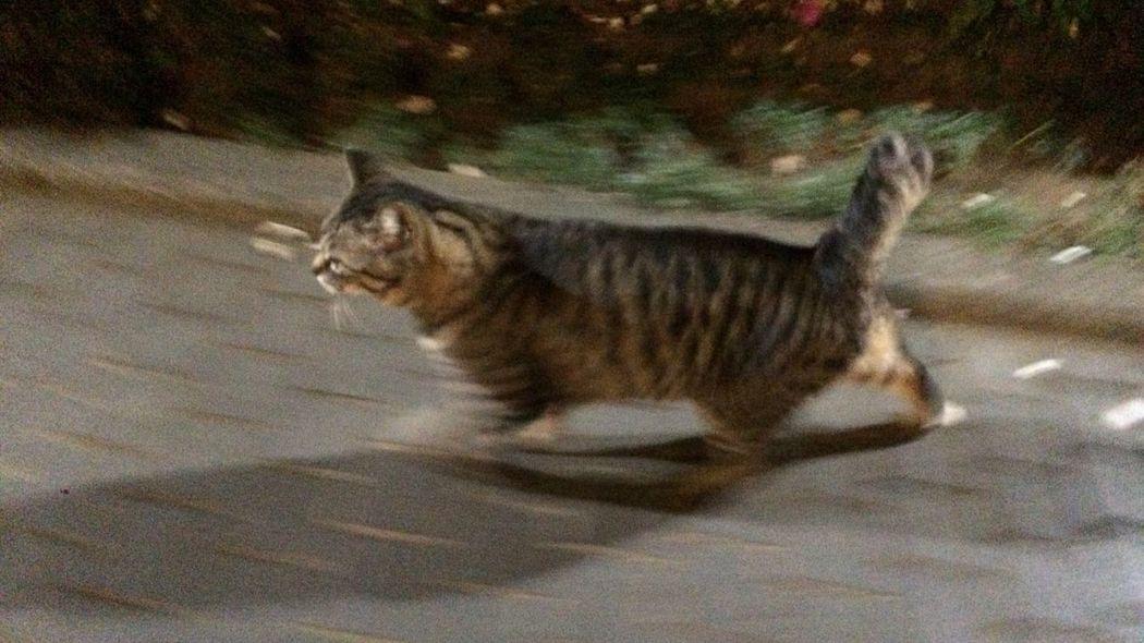 野良猫 Stray Cat Cat 夜ねこ 久々wwww