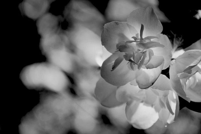 Flowers Blackandwhite I Want SUMMER!