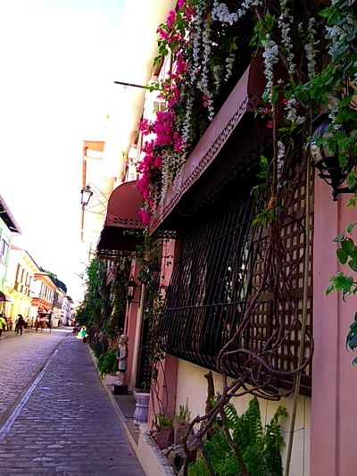 "Calle Crisologo in Vigan City is amongst the most visited tourist destination in the Ilocos Region. Located in the Northern part of the Philippines and situated near the Baroque Cathedral, Calle Crisologo is known for its old cobblestone buildings built during the Spanish Colonization, its horse drawn vehicles called ""kalesa"" and stores where tourists can buy souvenirs. #History #touristdestination #callecrisologo #Nature  #smile #freshmorning #building #History #philippines #ilocandia #ilocosnorte #vigan #heritage #oldstreet Architecture Building Exterior Built Structure Outdoors Day Plant Flower"
