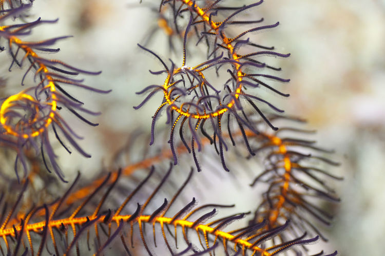 Close-up of dry leaf on tree