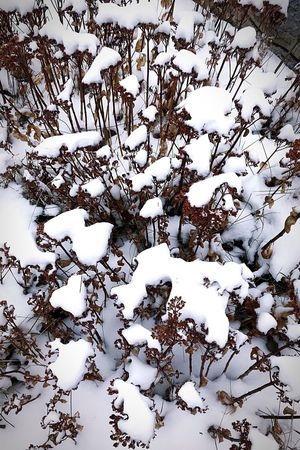 Shades Of Winter Snow Winter Cold Temperature Nature No People Outdoors Beauty In Nature Day Tree The Week On EyeEem Wintertime Snowing Winter The Week On Eyem Landscape_photography Landscape_Collection Beauty In Nature