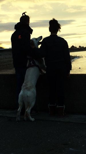 Sunset trio Togetherness Sky Sunset Full Length Dog Lifestyles Real People Bonding Men Two People Rear View Leisure Activity Outdoors Women Friendship Pets Day Adult People