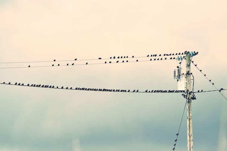 Highvoltage Birds Wildlife Nikon Ireland🍀