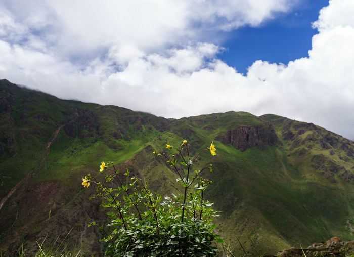 Colour Your Horizn Anden Art Chinchero Culture Cusco History Inca Landscape Old People Peru Pisac Ruins Sacred Valley South America Traveling Showcase March Dahlia Flower Landscapes With WhiteWall