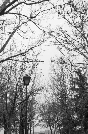 Black and white bare trees walk. B&w Photography B&w Street Photography Bare Branches Bare Tree Bare Trees Black And White Branch Forest Nature No People Outdoors Park Sky Streetlight Tree