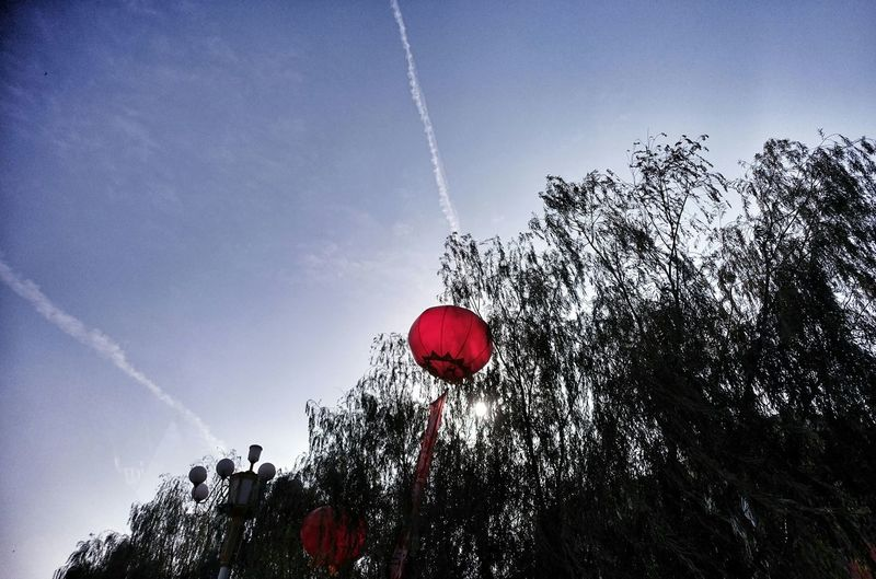 China Photos Sunny Day Celebration Red Lanterns Streetphotography Treepark Taking Photos Clouds And Sky Fresh Scent Light And Shadow Streamzoofamily