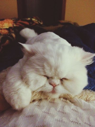 Sleepy Cat My Cat Cat♡ White Snow Fluffy Cute Winter Cold