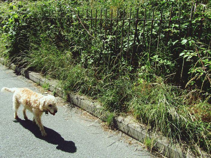 Sunny dog day
