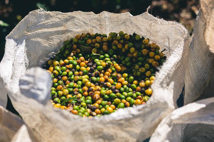 Harvest coffe