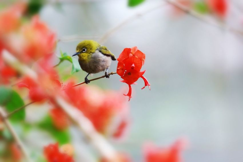 Animal Themes Animal Wildlife Animal Animals In The Wild Invertebrate Insect One Animal No People Selective Focus Close-up Plant Freshness Red Beauty In Nature Food Nature Flower Day Focus On Foreground Bird