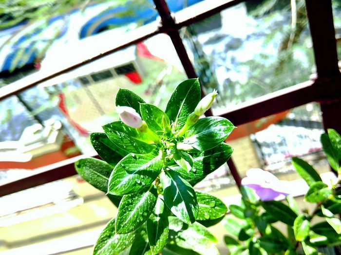 Window Close-up Green Color Leaf No People Day Plant Indoors  Growth Nature Outdoors Plant Petal Flower Head Growth Nature Beauty In Nature Freshness Fragility