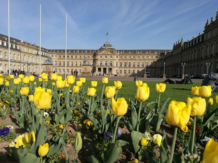 Castle Flower Yellow Nature Architecture City Beauty In Nature Outdoors Day