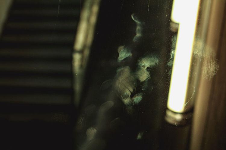 Close-up of cat seen through glass window