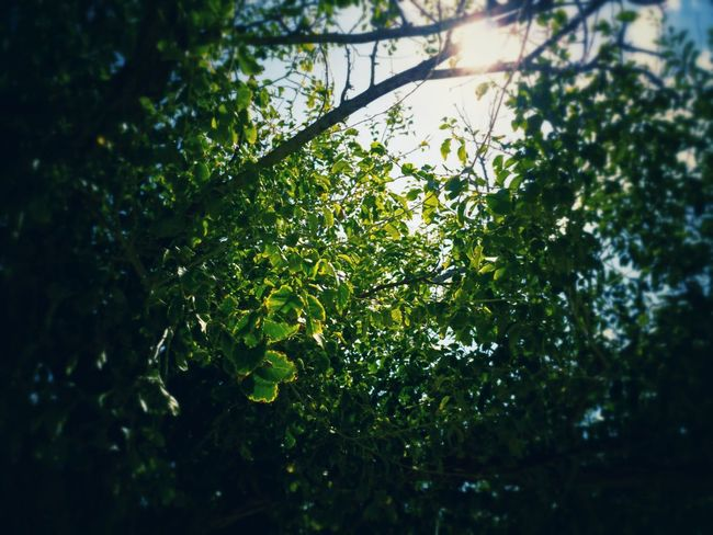 Greenery Tree Nature Green Color Growth Branch No People Leaf Beauty In Nature Outdoors Scenics Close-up The Week On EyeEm EyeEm Nature Sky Eyeeybestshots Adventure Perspectives On Nature EyeEmNewHere