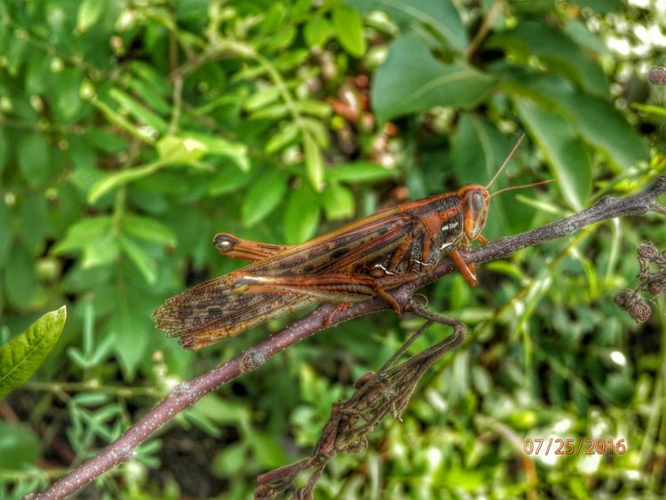 Nature at its finest! Locust Abugslife