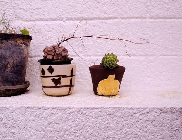 植物が生き生きとする季節。楽しみだ✨✨✨ Enjoying Life Relaxing Happiness Fujifilm_xseries Gleen