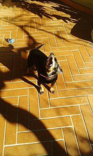 i love my dog light and shadow dog Bark