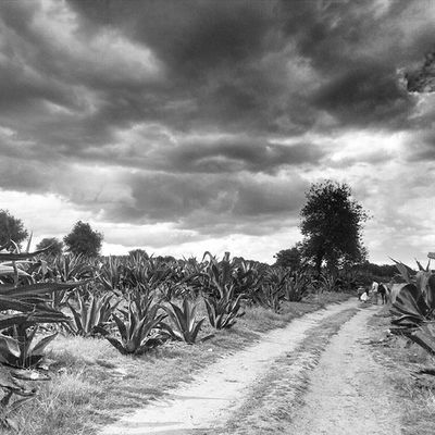 Ruta del Pulque Rancho San Isidro Tlaxcala Mexico Travel Mexican Mexico_maravilloso Viaje Enjoy Happy Photogrid Photooftheday Blackandwhite Instamex Instagood Eye4photography  Enjoying Life EyeEm Best Shots Traveling Enjoying Showcase: December Turismo Black And White Blackandwhite Photography Taking Photos FotoDelDia Mx